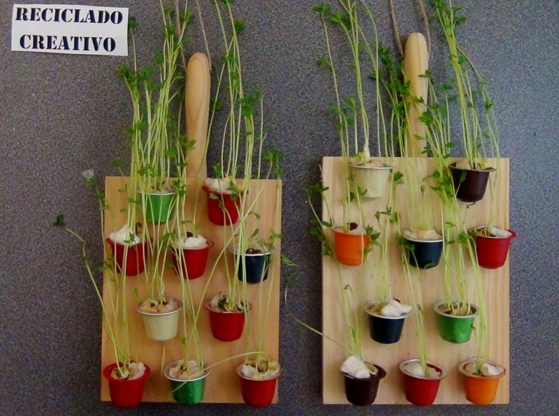 C mo germinar lentejas en c psulas de caf recicladas for Jardines con maicillo