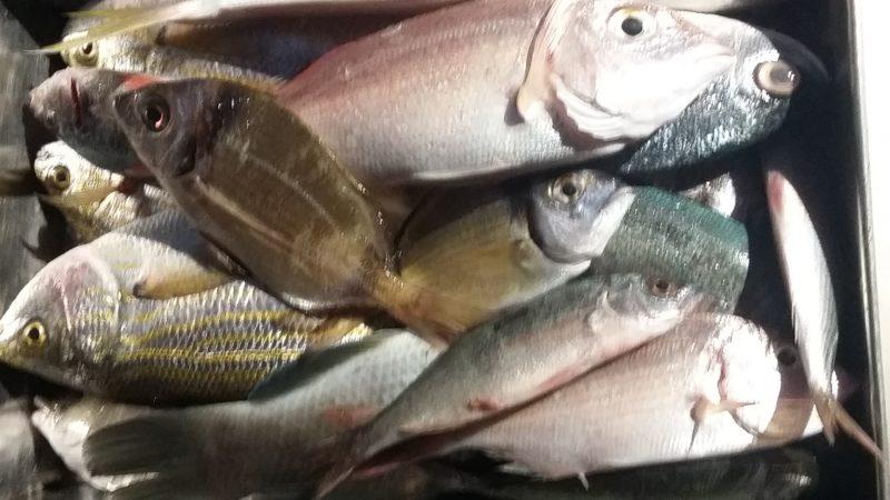 Pescado de descarte RecicladoCreativo