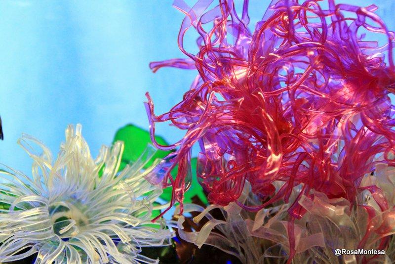 Ortigas y algas marinas con botellas de plástico