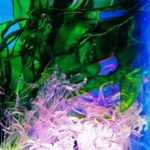 Algas marinas hechas con botellas de plástico