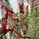 Hojas de plantas con plástico PET