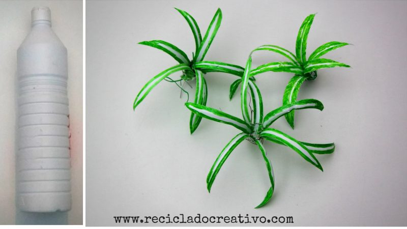 Plantas de cintas o malamadre con botellas de plástico Reciclado Creativo