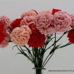 Claveles de ganchillo - Flores de crochet
