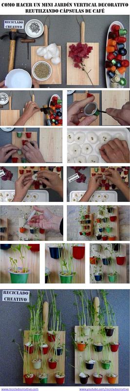 Lentejas Germinadas Cápsulas de café recicladas, Mini Jardín Vertical decorativo