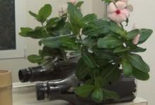 RecicladoCreativo.com recycled plastic bottles gardening. Botellas recicladas para plantas